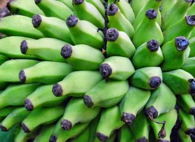 Najlepsze prebiotyki znajdziesz w naturalnej żywności