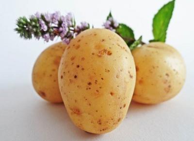 Ukochany ziemniak i jak z nim postępować aby nie chorować! - Rytmy Natury