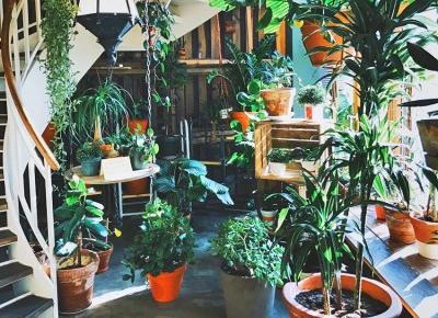 Rośliny, które zadbają o jakość powietrza w Twoim domu