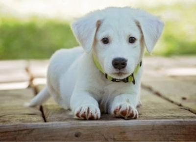 Psy to najlepsi przyjaciele człowieka .