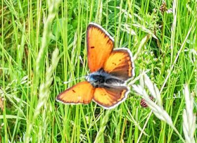 Kobiece rozmówki przy herbacie- podróże, książki, kuchnia, życie na wsi: Na izerskiej łące- motyle, pszczoły, kleszcze i inne żyjątka