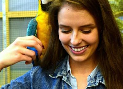 Alicja Kadubiec: Papugarnia