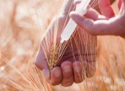 W świecie GMO – AMSOFF