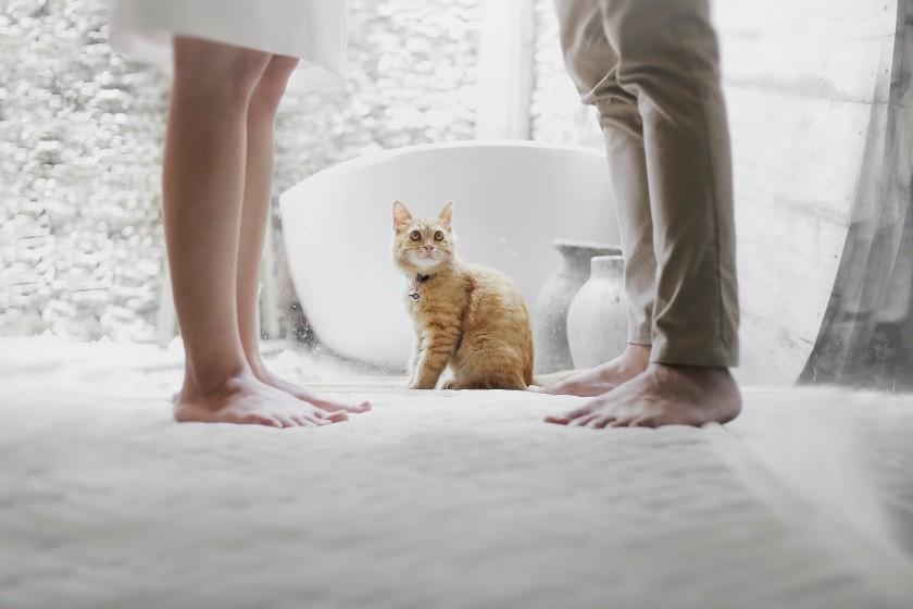 Kot albo ja! Wyobrażacie sobie takie ultimatum? - KOCIA KOŁYSKA - Wszystko o kotach