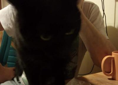 Czy koty widzą w nas swojego Pana czy... Pupila? - KOCIA KOŁYSKA - Wszystko o kotach