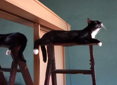 Koty lubią być wysoko. Dlaczego?