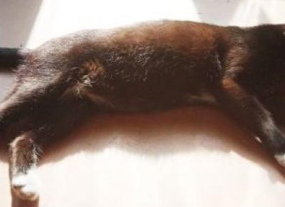 Jak ulżyć kotu w upały. Sprawdź i pomóż kotu przetrwać upały
