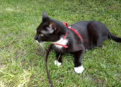 Pierwszy spacer z kotem. Kilka refleksji i fotorelacja