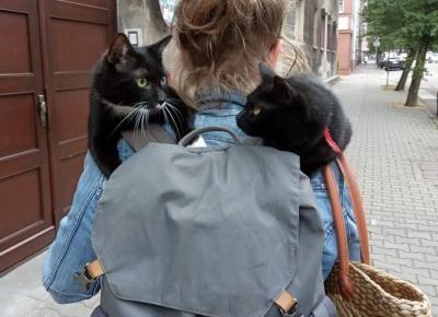 Czego starszy kot może nauczyć młodego czyli spacer z dwoma kotami