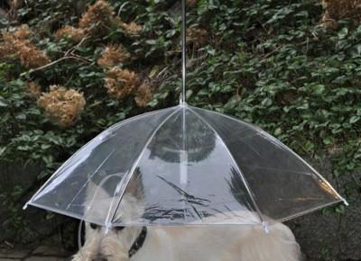 Deszcz jesienny nam niestraszny! Przegląd