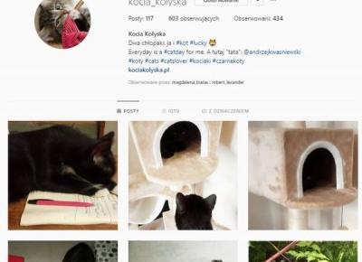 Instacat - 30 najpopularniejszych opisów kocich postów na Instagramie