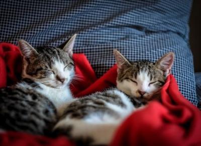 Wszyscy kochamy koty! Podsumowanie wyników ankiety Kocia Kołyska - KOCIA KOŁYSKA - Wszystko o kotach
