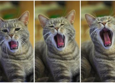 Ankieta Kocia Kołyska dla wszystkich miłośników kotów! - KOCIA KOŁYSKA - Wszystko o kotach