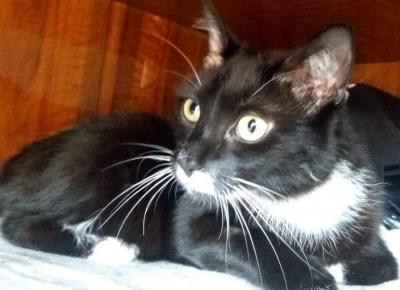 11 niewinnych rzeczy, których panicznie boją się koty - KOCIA KOŁYSKA - Wszystko o kotach