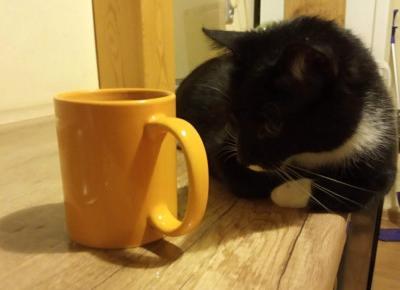 4 projekty DIY, które możecie wraz z dziećmi zrobić dla swoich kotów - KOCIA KOŁYSKA - Wszystko o kotach