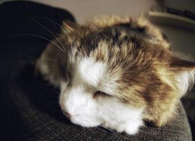 9 sygnałów, że Twój kot Cię kocha!