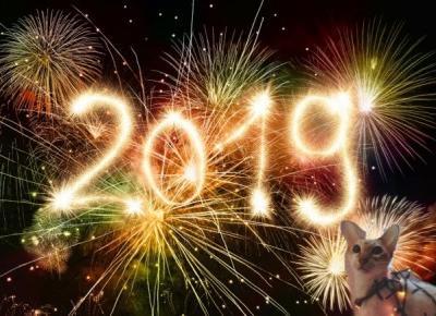 Kot w Sylwestra i Nowy Rok. Jak go uchronić przed stresem