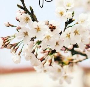 inspiracionessx: Wiosna!
