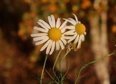 Anks_blog: Na jesiennym spacerze..