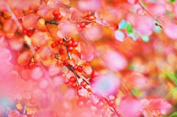 czerwień w ogrodzie