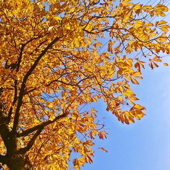 jesień, która cieszy