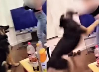 Kobieta bije swojego psa po głowie w bokserskich rękawicach. Wideo wywołało burzę
