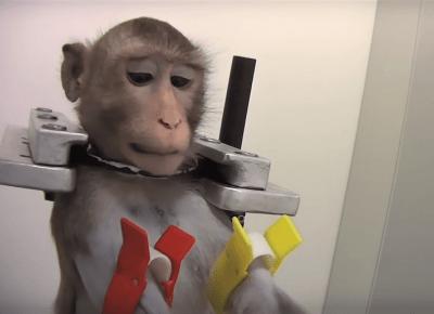 Koniec koszmaru torturowanych zwierząt! Laboratorium w Niemczech zostanie zamknięte