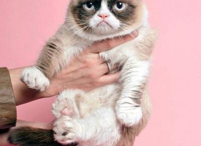 Światowy Dzień Kota - najsłynniejsze reklamy z kotami