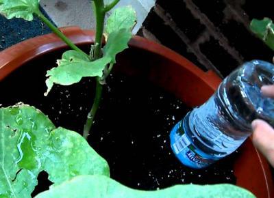 Domowe Sposoby na Podlewanie Roślin Podczas Wyjazdu