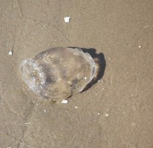 Zdjęcia znad morza TYLKO W DESIGNYOURHAPPYLIFE.COM