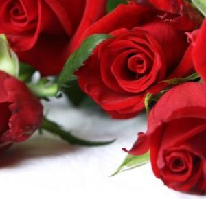 My life is my only love.: Bukiet róż
