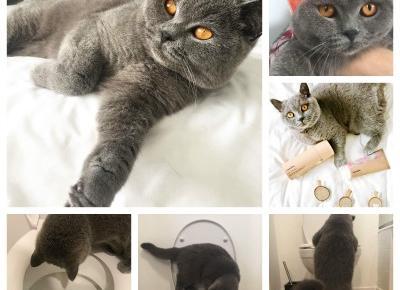 Szarości codzienności #2 - o kocie w toalecie, sklepie i rocznicy - BeautypediaPatt | blog urodowy