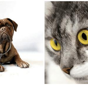 Pies czy kot? - #teamdog vs #teamcat | Blogodynka.pl