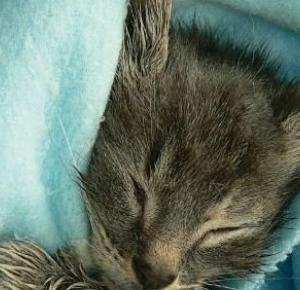 Biuro kotów znalezionych - Kinga Izdebska | Books My Love