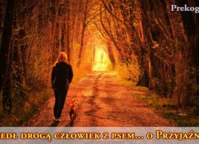 o Przyjaźni: wędrowiec i pies | Prekognicja.pl