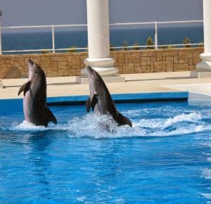 Pływałam z delfinami! | Sally Crolicovsca