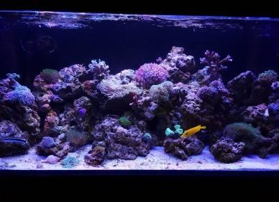 Ile kosztuje akwarium morskie? - Czary-Marty