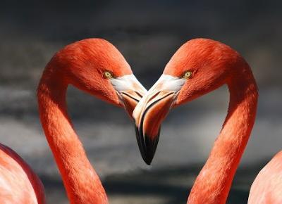 Flamingi - ptaki, które wolą być różowe | celebruj czas wolny