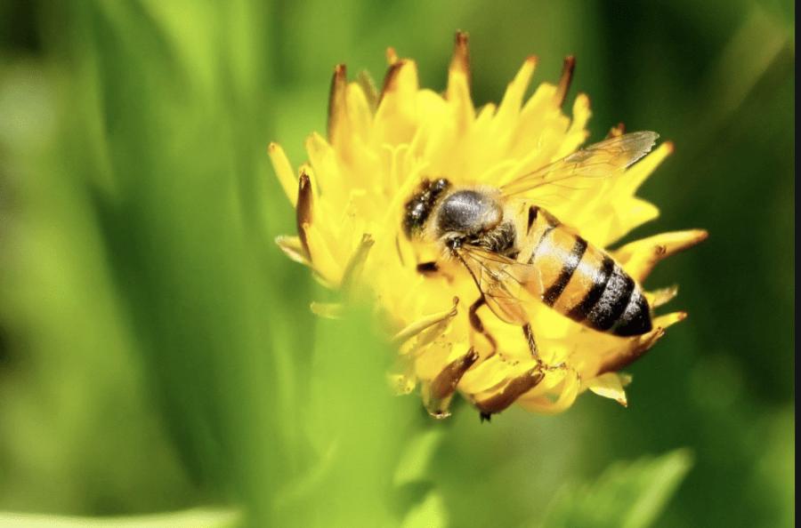 7 Prostych Rzeczy Które Możesz Zrobić Aby Pomóc Pszczołom