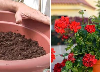 Jak Sadzić Pnące Kwiaty bez Łamania Łodyg? - Prosty Trik Najlepszych Ogrodników