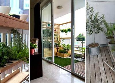 Mini Ogródek czyli Uprawa Ziół Warzyw i Owoców na Balkonie