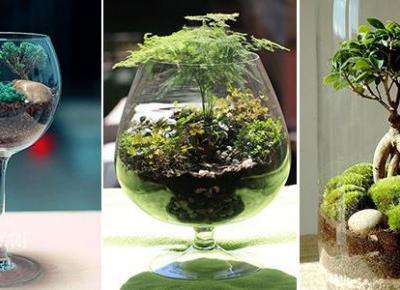 Ogród w Szkle - TOP 23 Inspiracje na Kompozycję Roślin w Szkle