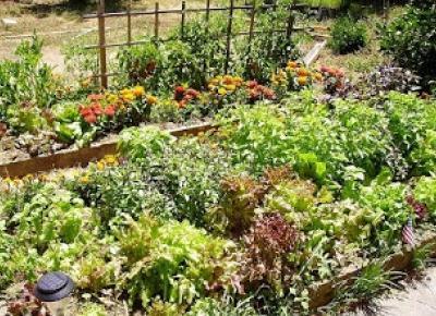 Poradnik internetowy, recenzje, porady, wskazówki, przepisy, zawsze przydatne i zawsze na czasie: Ogródek warzywny - jakie warzywa lubią swoje towarzystwo, a jakie nie?