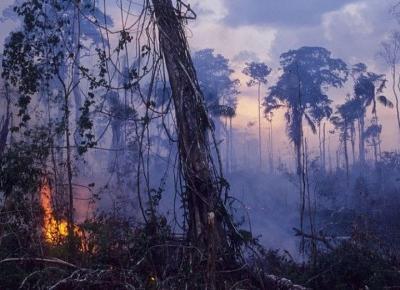 LASY W AMAZONII PŁONĄ! CO MOŻEMY ZROBIĆ, ABY POMÓC?