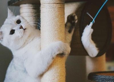 Kot w bloku – 5 rad dla początkujących