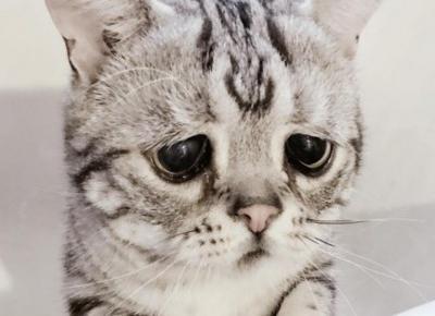 Kto przytuli Luhu? To najsmutniejszy kot na Instagramie!
