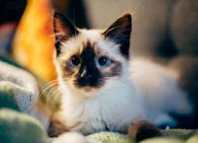 To powinieneś wiedzieć przed zakupem kota!