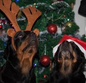 Zdążyć do domu na Święta ...