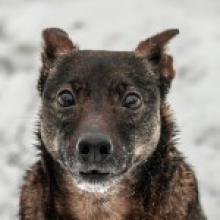 Pies z domu tymczasowego