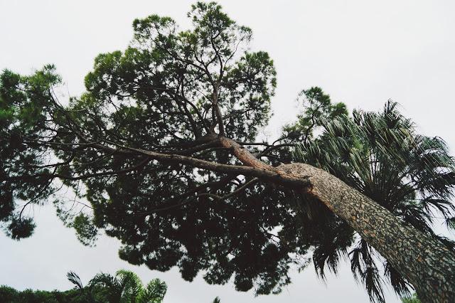 Dookola-swiata: Mix luźnych zdjęć przyrody